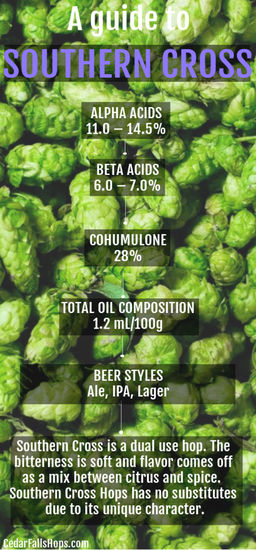 Southern cross hops for sale, brewing, home brewing